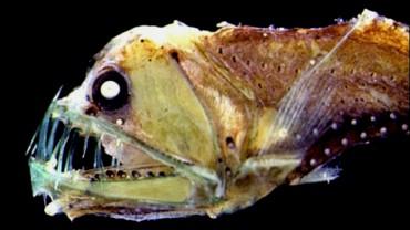 12 najbardziej przerażających stworzeń, jakie żyją w oceanie. Nie oglądaj ich przed snem!