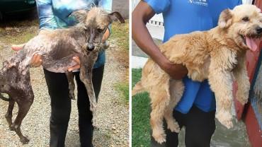 """Uratowane psy """"przed i po"""""""