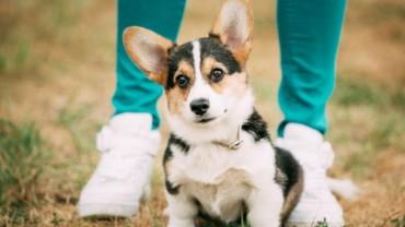 6 psich zachowań, które na pewno dobrze znasz, ale czy wiesz, co mają Ci zakomunikować?