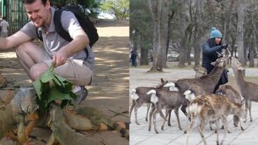 10 niesamowitych miejsc, gdzie ludzie i zwierzęta żyją blisko siebie