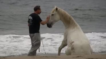 Dawid Lichman to prawdziwy zaklinacz koni! Zobaczcie, jak trenuje swoje zwierzęta