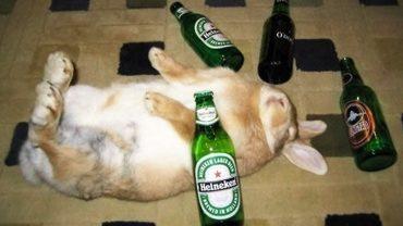 Zwierzęta upojone alkoholem. Zobacz zdjęcia, które rozbawia cię do łez! Numer 7 najlepszy!