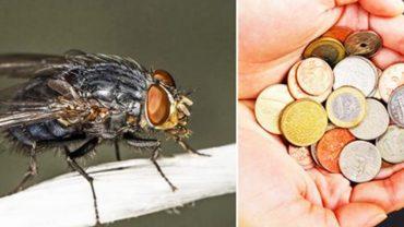 Ta prosta metoda sprawi, że muchy będą się trzymać od twojego domu z daleka. Wypróbuj, a nie pożałujesz!