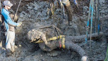 Amerykański farmer spokojnie kopał ziemię na swoim polu, aż nagle natrafił na… szczątki mamuta!