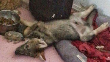Mężczyzna dostał szczeniaczka, ale gdy pies zaczął rosnąć okazało się, że nie znał całej prawdy