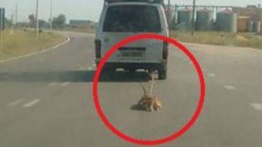 Mieszkańcy greckiego Topejros są wstrząśnięci reakcją swojej policji, która totalnie zbagatelizowała zgłoszenie o mężczyźnie ciągnącym psa za samochodem