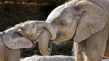 24 zdjęcia zwierząt, które są dobrymi rodzicami
