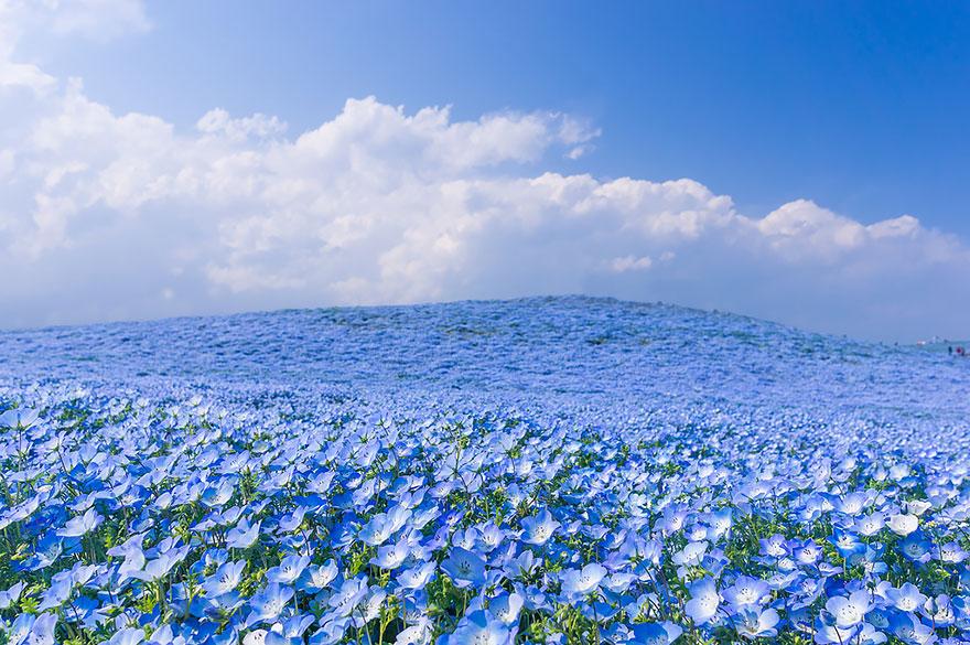 10. kwiaty