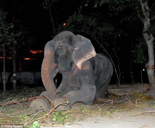 Po 50 latach niewoli - słoń wypuszczony na wolność zapłakał!