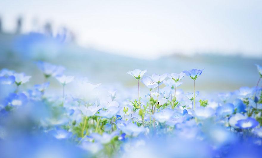 12. kwiaty