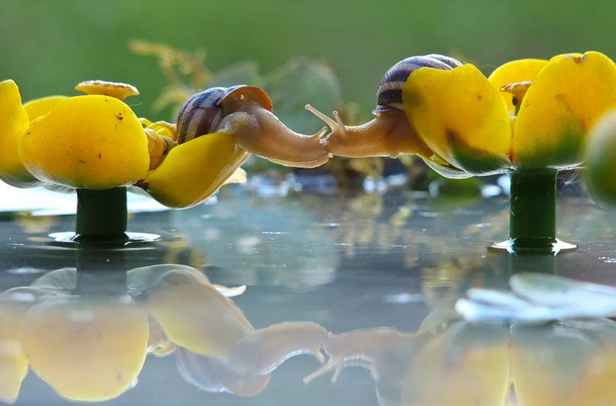 Magiczny świat ślimaków! Zobacz jak wygląda rzeczywistość z drugiej strony...