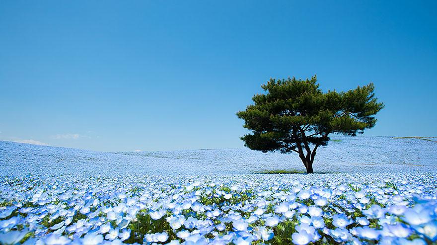 14. kwiaty