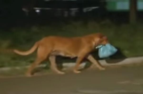 Pies każdego dnia przemierza prawie 13 kilometrów, żeby nakarmić przyjaciół