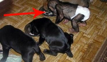 Niezwykła adopcja! Przekonaj się, że zwierzęta są zdolne do ludzkich odruchów!