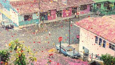Miliony płatków kwiatów wybucha z wulkanu i spada na całą wioskę… Efekty zapierające dech.