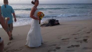 Cieszyli się wspaniałym ślubem na plaży, ale niespodziewany gość zakłócił ich uroczystość…