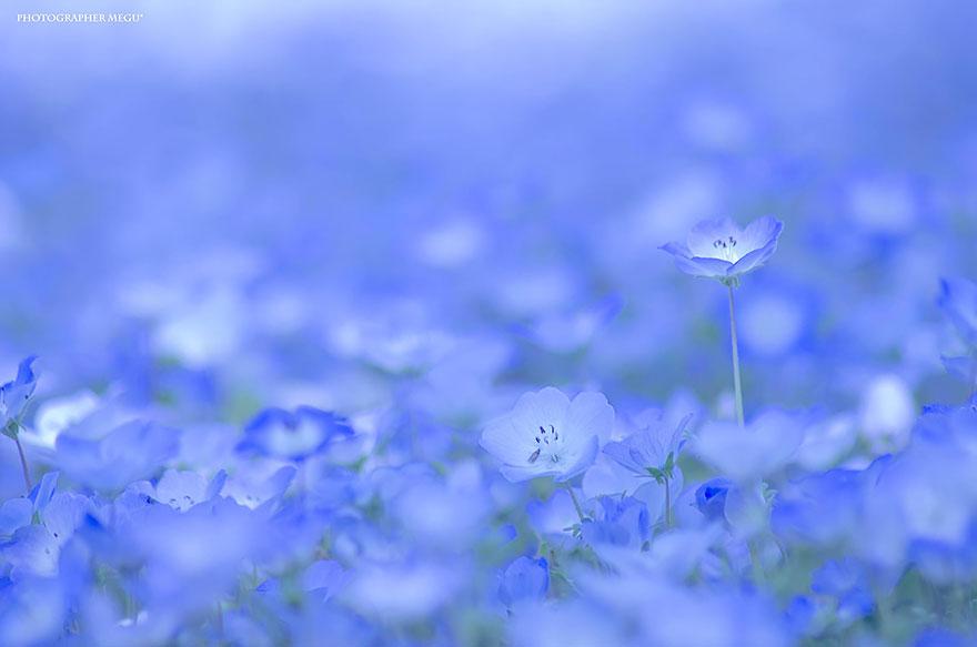 3. kwiatki