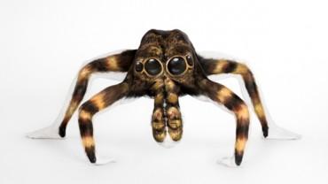 To nie jest Tarantula! Przyjrzyj się!