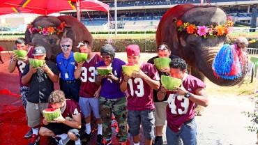 Słonie vs ludzie w konkursie jedzenia arbuza!