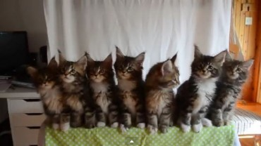 Chciała zrobić zdjęcie 7 kotom… Zobaczcie, co się stało