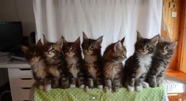Chciała zrobić zdjęcie 7 kotom... Zobaczcie, co się stało