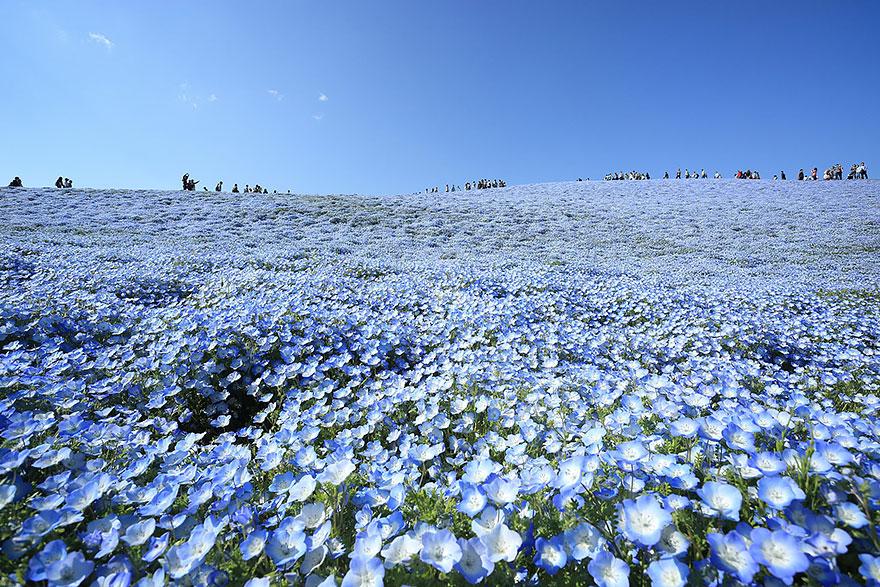 7. kwiaty