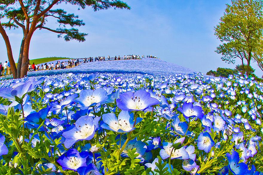 8. kwiaty