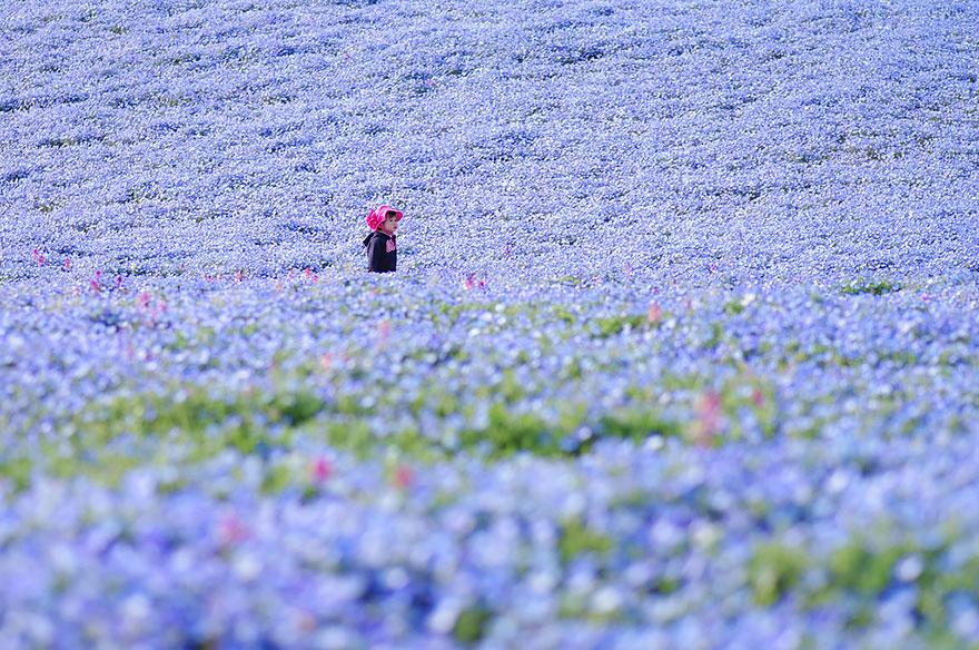 9. kwiaty