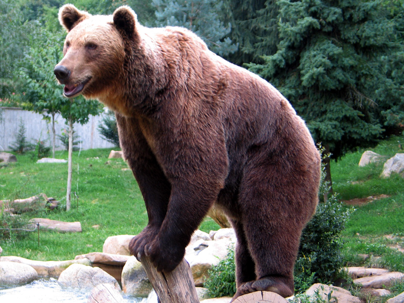 6 najniebezpieczniejszych zwierząt w Polsce
