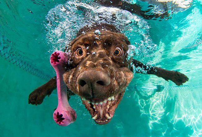 pies pod woda 3