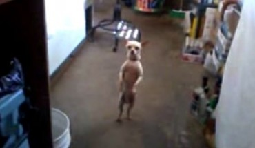 Widziałem wcześniej bawiące się i biegające psy… ale ten jest szalony!