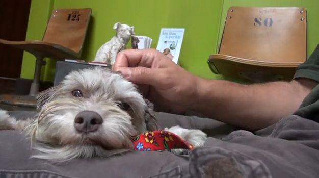 Na parkingu sklepu mieszkał porzucony pies, który teraz potrzebuje nowego domu