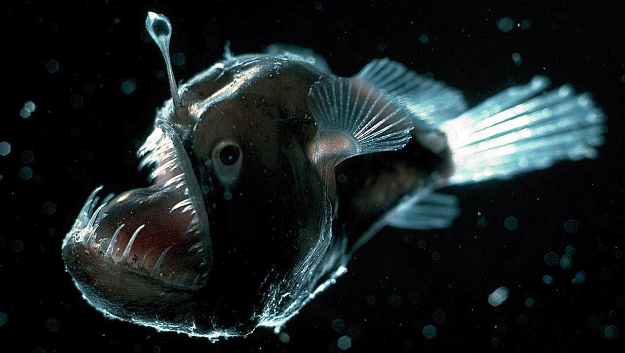 przerazajace-morskie-stworzenia4