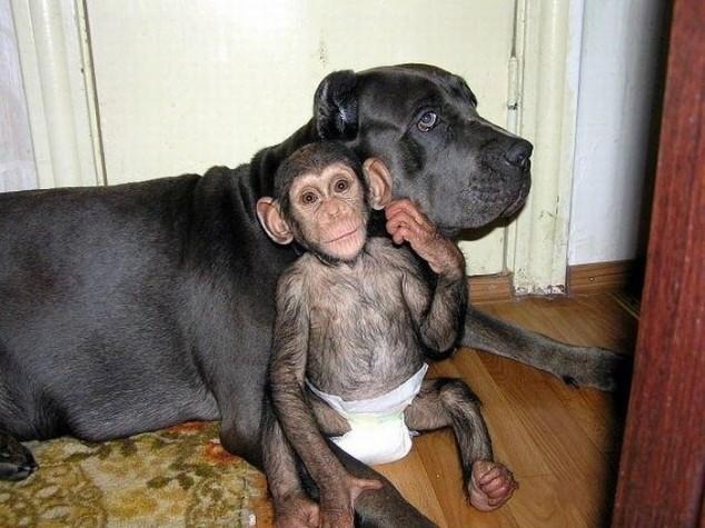 psia-adopcja1