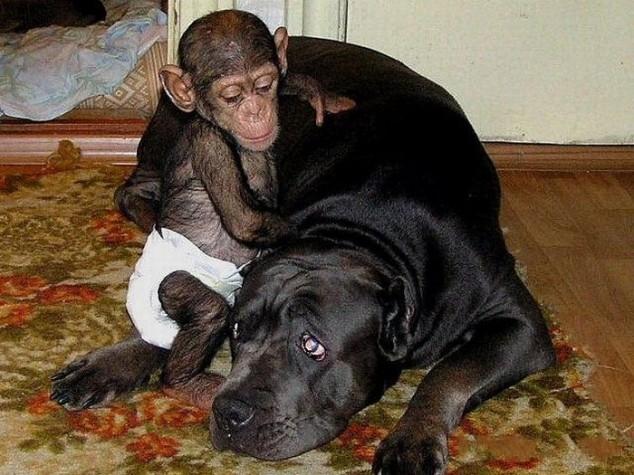 psia-adopcja4