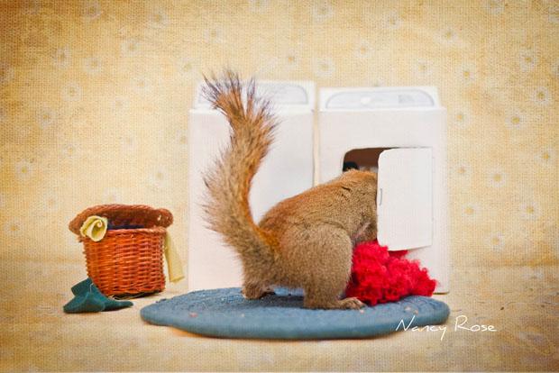 Te wiewiórki to prawdziwe modelki. Zobacz niezwykłe zdjęcia Nancy Rose!