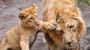Zwierzęta szturchają się czule… jakie to słodkie!