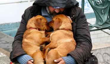 Psi przyjaciel – zawsze będzie cię kochał, bez względu na to ile masz pieniędzy…