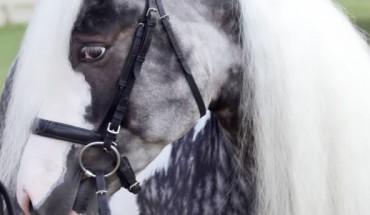 8 najpiękniejszych i najrzadszych koni na świecie
