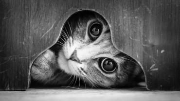 Koty jako modele? Zachwycająca fotografia czarno-biała…
