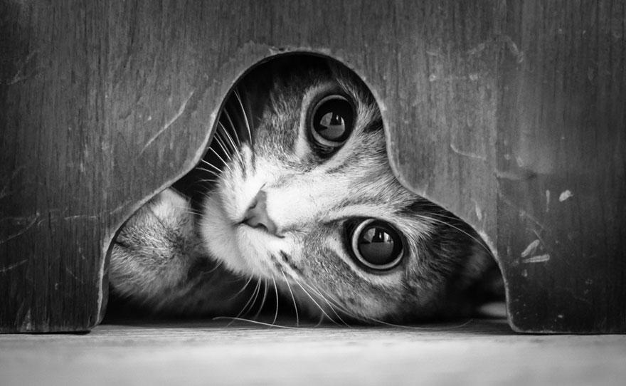 Koty jako modele? Zachwycająca fotografia czarno-biała...