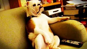 Ten psy świetnie radzą sobie w typowo ludzkich rolach