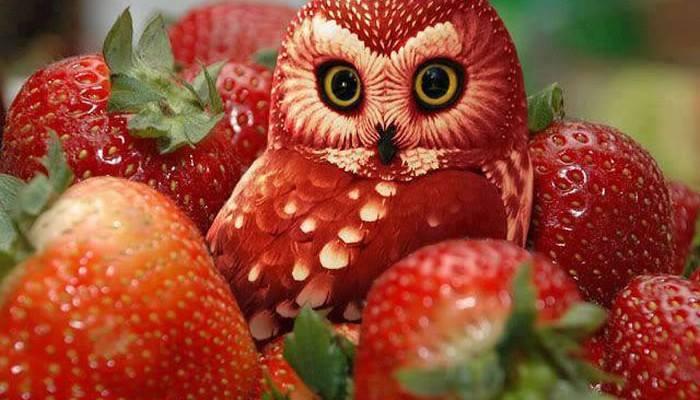 Inspirujące cuda z owoców i warzyw. Zrób je sam! :)
