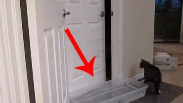 Nie ma drzwi, których ten kot nie byłby w stanie otworzyć!