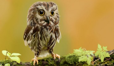 Najgrozniejsze zwierzęta na świecie… zanim jeszcze staną się niebezpieczne :)