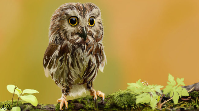 Najgrozniejsze zwierzęta na świecie... zanim jeszcze staną się niebezpieczne :)