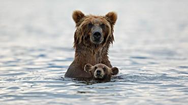 Niełatwo być misiem… Zobacz, jak małe niedźwiadki uczą się dorosłego życia!