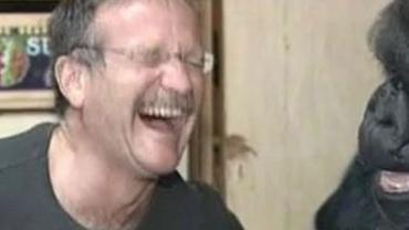 Robin Williams i goryl Koko. Ich spotkanie zapada w pamięć!