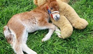 Zwierzęta też kochają zabawki!