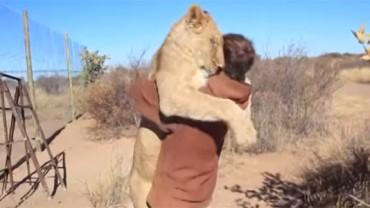 To, co zrobił z tym lwem, jest nie do pomyślenia… ale stało się faktem!